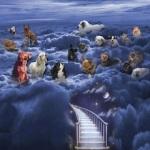 el cielo de los animales Perros